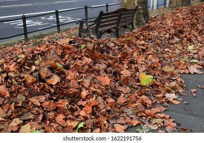 Autumn leaves surrounding a street pavement bench along Dorset Street in Drumcondra, Dublin, Ireland.