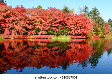 Autumn leaves and their reflections on the pond, Kumoba pond, Karuizawa