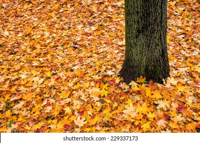 autumn leaves and tree