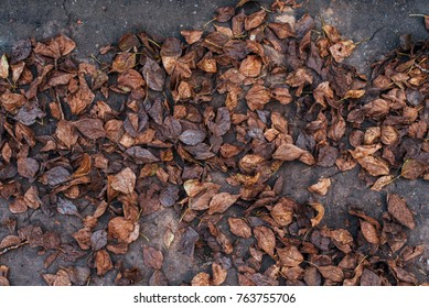Autumn leaves with tree on grass mud. Autumn weather. A lot brown old leaves ground. Background nature November.