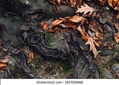 autumn leaves and tree roots abstract detail on forest ground