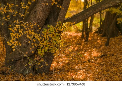 Autumn leaves and tree in sunlight