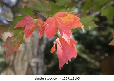 Autumn leaves and Tree Trunk
