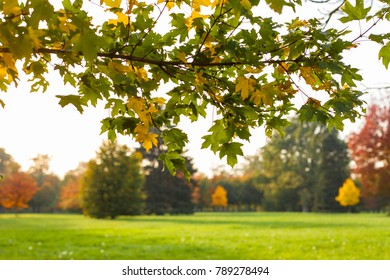 Autumn leaves and trees in Versailles park