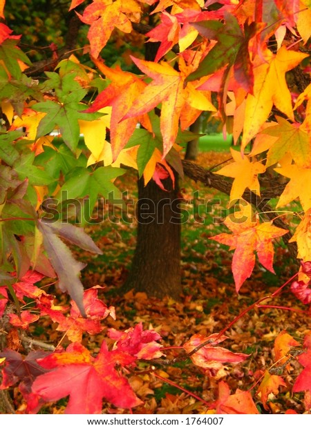 Autumn Leaves with trunk on background