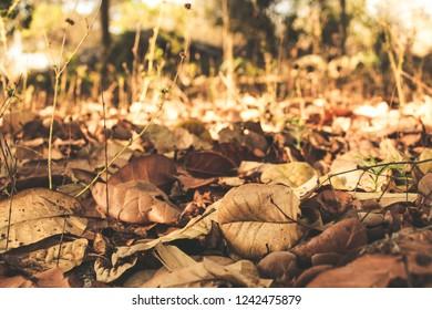 autumn leaves wallpapper