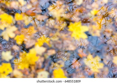 Autumn Leaves Water Background