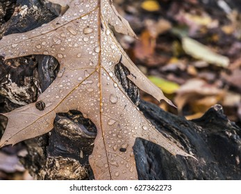Autumn at  leaves with water drops in forest
