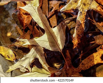 Autumn leaves in water with shadow