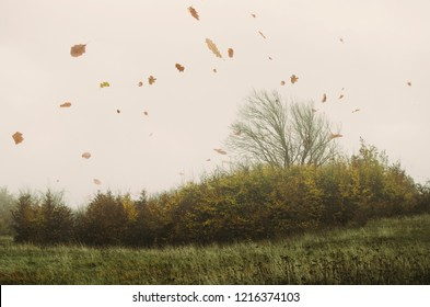 autumn leaves in the wind, fall landscape