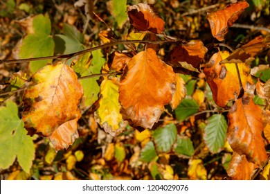 Autumn leaves in the wood. Close up.