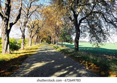 Autumn in the linden alley in Reinberg Germany
