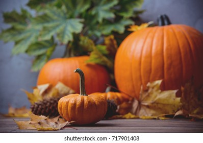 Autumn little pumpkin with leaves on Fairy Ligths background
