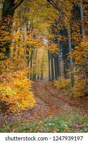 Autumn makes al the colors in the forest so beautiful