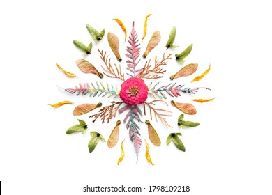 Autumn mandala made of dry fern, seeds and flower on white background. Flat lay. Cut out.