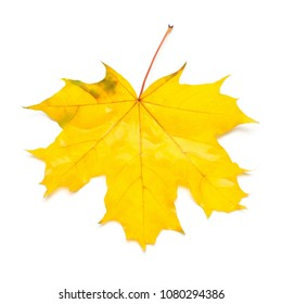 Autumn maple leaf isolated on white background. Falling foliage. Flat lay, top view, creative concept