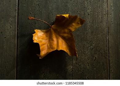 autumn maple leaf on black wood table