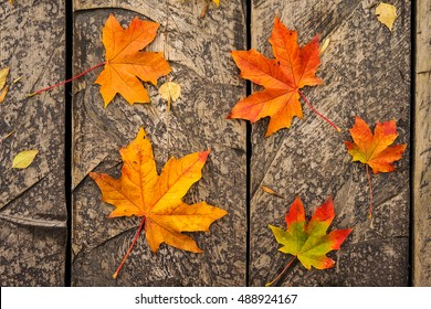 Autumn maple leaf on wooden background in the autumnal city park. Red and orange group leaf outdoor.wallpaper autumn leaves in beautiful fall park. Autumn nature concept.