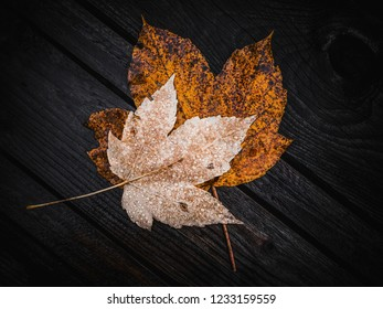 autumn maple leafs on wood background