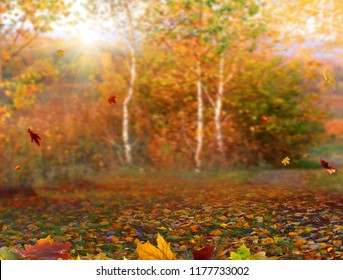 Autumn maple leaves .Beautiful autumn landscape with colorful foliage. Falling leaves natural background