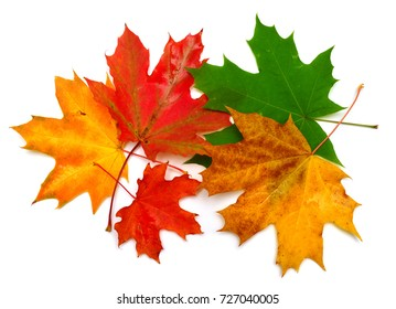 Autumn maple leaves isolated on white background. Falling foliage. Flat lay, top view, creative concept
