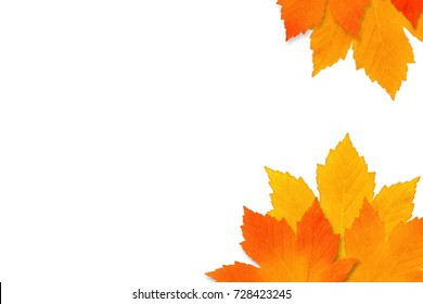 Autumn maple leaves isolated on white background. Copy space