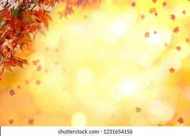 Autumn Maple leaves with nice yellow tone bokeh in autumn in background. Copy Space.