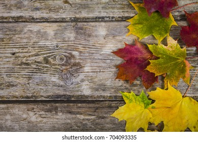 Autumn maple leaves on an old wooden background