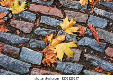 Autumn maple leaves on a stone pavement.