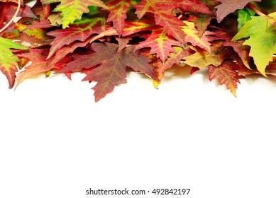 autumn maple leaves on white