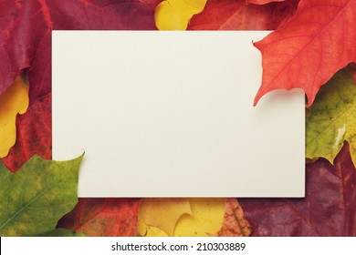autumn maple leaves with paper card, fall season background