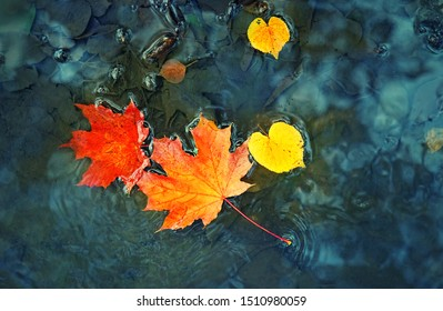 autumn maple leaves in puddle. autumn atmosphere image. fall season concept. bright leaves on water background. flat lay