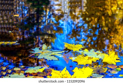 Autumn maple leaves in puddle of water. Puddle of water with autumn maple leaves. Autumn maple leaves in puddle