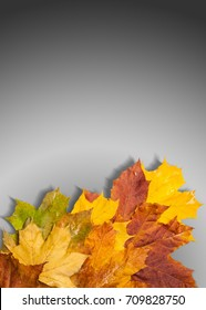 autumn maple leaves red yellow green. free field for the text in the image