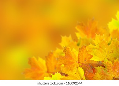 autumn maple leaves with selective focus