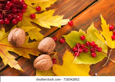 Autumn maple leaves, viburnum and walnuts frame on rustic wood background with copy space. Beautiful fall yellow foliage border. Seasonal harvest concept, closeup
