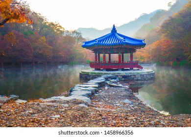 Autumn Maple in Naejangsan national park,Colorful autumn season in South Korea,tourist attraction in South korea.