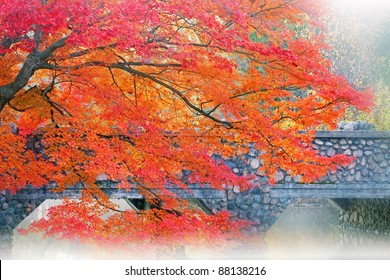 Autumn maple and stone bridge in fog, Milham Park, Kalamazoo, Michigan, USA
