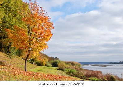 Autumn maple tree on the river bank