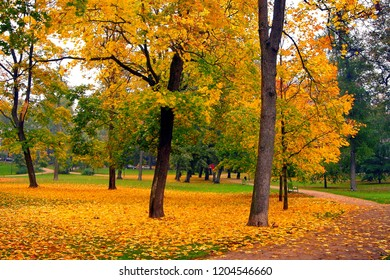 autumn maple trees in a fall city park