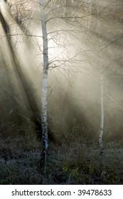 Autumn mists. An angel trace.