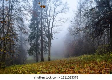Autumn misty forest fog landscape. Forest mist autumn fog view. Autumn forest mist fog scene. Misty forest in autumn fog