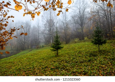 Autumn misty forest park landscape. Forest mist in autumn fog. Autumn forest mist scene. Forest mist in autumn fog