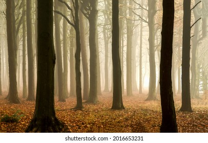 Autumn misty forest trees background. Mystery forest mist. Misty forest background. Forest in mist