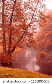 Autumn misty morning. Autumn dawn scene. Alden trees on foggy riverbank. Misty autumn stream
