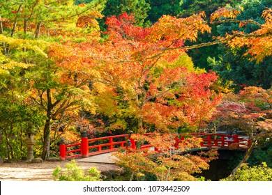 Autumn in Miyajima, Momiji valley park