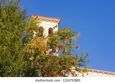 Autumn. Montenegro, Herceg Novi city. Branch of pomegranate tree (Punica granatum) with ripe fruits against blue sky and Tower of St. Jerome
