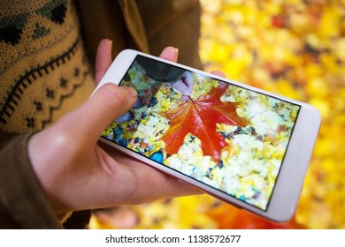 autumn mood - girl is taking a photo on smartphone autumn maple leaves