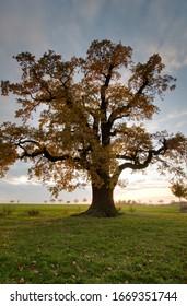 Autumn mood on the cold oak