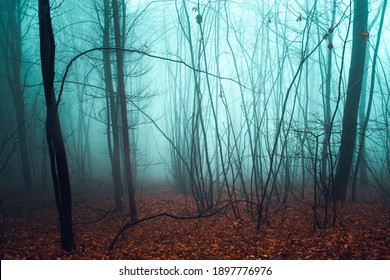 Autumn moody foggy forest in mountain